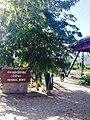 Mae Hi, Pai District, Mae Hong Son 58130, Thailand - panoramio.jpg