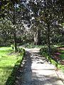 Magnolia Plantation and Gardens - Charleston, South Carolina (8556529272).jpg