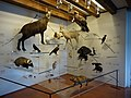 Malcesine (VR), Museo di Storia Naturale.jpg