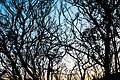 Malibu Tree Silhouette .jpg