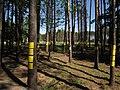 Maly Trascianiec extermination camp — Blahaŭščyna 3.jpg