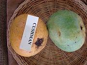 Mango Cushman Asit fs8.jpg