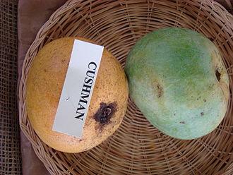 Cushman (mango) - Display of 'Cushman' mango at the Redland Summer Fruit Festival, Fruit and Spice Park, Homestead, Florida