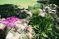 Mani ziedi My flowers - panoramio (54).jpg