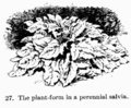 Manual of Gardening fig027.png