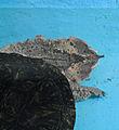 Mata mata in Pata Zoo 1.jpg