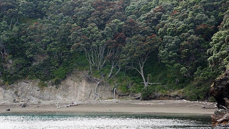 File:Mayor Island Track, Mayor Island, New Zealand - panoramio (5).jpg