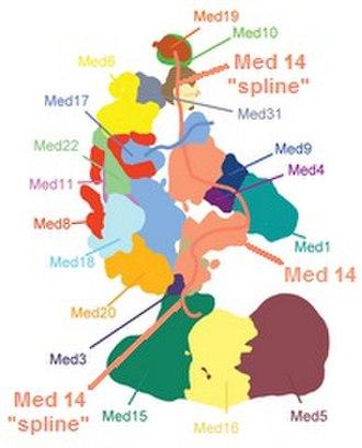 Mediator (coactivator) - Image: Mediator Spline 4TC