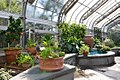 Mediterranean Room at the US Botanic Garden (25736736390).jpg