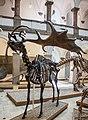 Megaloceros giganteus, Munich, 2017-09-11.jpg