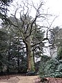 Memorial seat and Sweet Chestnut - geograph.org.uk - 1715387.jpg