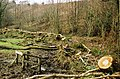 Meshaw, hedge laying - geograph.org.uk - 38224.jpg
