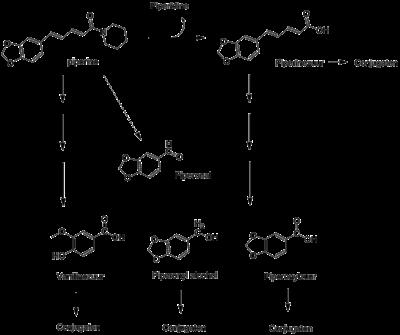 metabolisme lever