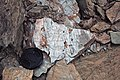 Metcalf Phyllite (Neoproterozoic; Laurel Creek Road outcrop, Great Smoky Mountains, Tennessee, USA) 7 (37148909825).jpg