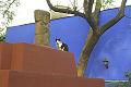 Mexcity frida cat.JPG