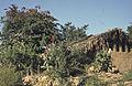 Mexico1980-104 hg.jpg