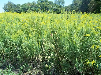 Midewin National Tallgrass Prairie - Flora of the Midewin National Tallgrass Prairie—MNTP.