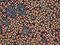 Mikrotilkades paikneva vedelkristalli erinevate faaside optilised kujutised polariseeritud valguses 40x.jpg