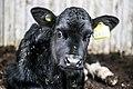 Milk industry 36.jpg