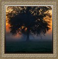 Mississippi sunrise tree - panoramio.jpg