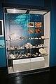 MolluscaDisplayBelfastMuseum.jpg