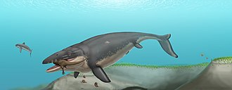 Mosasaurus - A restoration showing M. hoffmanni feeding on a theropod