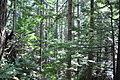 Mt. Walker Trail 03.jpg