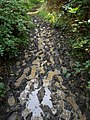 Muddy footpath by the Teign - geograph.org.uk - 992029.jpg