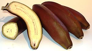 Red banana - Red banana longitudinal and cross sections