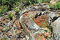 Muscovite schist (Precambrian; Blue Ridge, North Carolina, USA) 7.jpg