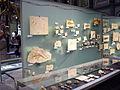 Museum für Naturkunde Berlin February 2008 0008.JPG
