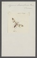 Myocoris - Print - Iconographia Zoologica - Special Collections University of Amsterdam - UBAINV0274 041 06 0002.tif
