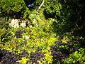 Nantes - jardin des plantes (11).JPG