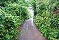 Narrow Devon lane in Stokenham. - geograph.org.uk - 824348.jpg