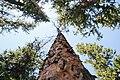 National Forest Development Road 448, Baker, United States (Unsplash).jpg