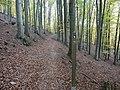 Nationalpark Kellerwald - Edersee - panoramio.jpg