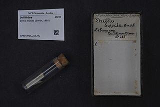 <i>Drillia dejecta</i> species of mollusc