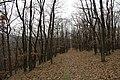 Nature reserve Šance in autumn 2012 (32).JPG