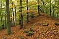 Nature reserve Vlčí důl in autumn 2014 (16).JPG