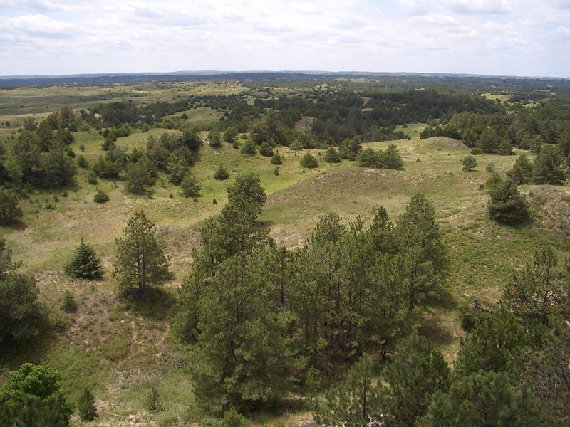 File:Nebraska National Forest, Bessey Ranger District, no. 1.jpg