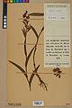 Neuchâtel Herbarium - Cephalanthera rubra - NEU000046834.jpg