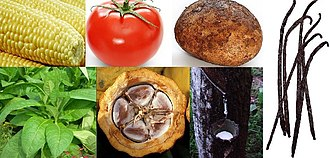 Columbian Exchange - New World native plants. Clockwise, from top left: 1. Maize (Zea mays) 2. Tomato (Solanum lycopersicum) 3. Potato (Solanum tuberosum) 4. Vanilla (Vanilla) 5. Pará rubber tree (Hevea brasiliensis) 6. Cacao (Theobroma cacao) 7. Tobacco (Nicotiana rustica)