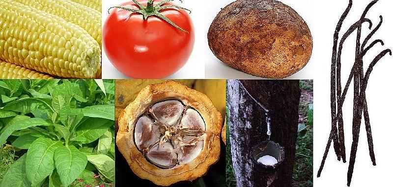 Native New World crops exchanged globally: Maize, tomato, potato, vanilla, rubber, cacao, tobacco.