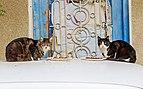 Nicosia 01-2017 img05 cats.jpg