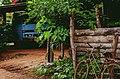 Nong Kham Hui, ตำบล ตองโขบ, Thailand (Unsplash).jpg