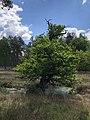 Nordrhein-Westfalen, Naturschutzgebiet Heidemoore im Kreis Viersen.jpg