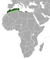North African Hedgehog area.png