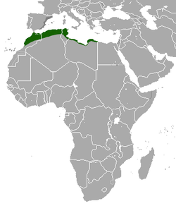 http://upload.wikimedia.org/wikipedia/commons/thumb/d/d0/North_African_Hedgehog_area.png/250px-North_African_Hedgehog_area.png