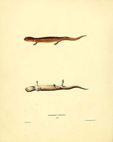 File:North American herpetology, or, A description of the reptiles inhabiting the United States (6075909353).jpg