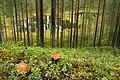 North Karelia, Finland - panoramio (1).jpg